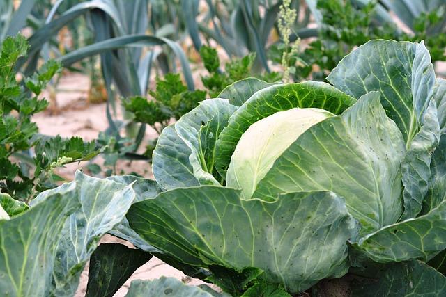 Menos química es mejor: Fertilizantes Orgánicos Naturales